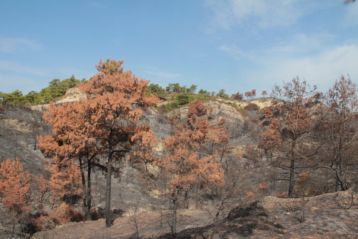 Αποτέλεσμα εικόνας για αποκατάσταση τοπίου σε δασικά οικοσυστήματα μετά από πυρκαγιές