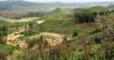 Ημερίδα με θέμα «Η Αποκατάσταση του Τοπίου της Ολυμπίας και ο ΒοτανικόςΚήπος»