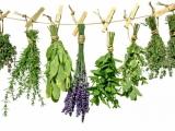 Υπό όρους η συλλογή αρωματικών φυτών στο Ν.Τρικάλων