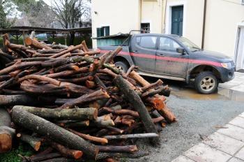 Αριδαία: Έκαψαν οχήματα του Δασαρχείου