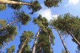 Πιλοτικό «Αειφορικό Πρότυπο Βιο-οικονομίας για τα Δάση και τις Ορεινές Περιοχές τηςΘεσσαλίας»