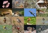 Βιοποικιλότητα: σε κίνδυνο και χωρίς πόρους για τη διατήρησήτης