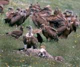 Η παρατήρηση πουλιών κάνει καλό στην οικονομία