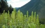 Δασαρχείο Καλαμάτας: Συλλογή αρωματικών φυτών και βοτάνων, τι και σε τι ποσότητεςεπιτρέπεται