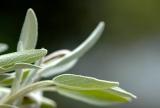Πάνε να εξαφανίσουν και τα αρωματικά φυτά καιβότανα