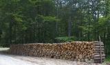 Θερμή υποδοχή του νομοσχεδίου για τους δασικούς συνεταιρισμούς από τουςφορείς