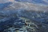 Τα δάση-βοσκότοποι που καίγονται θα κηρύσσονταιαναδασωτέα;