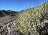 Δ/νση Δασών Χανίων: Ανακοίνωση για αρωματικά και φαρμακευτικάφυτά