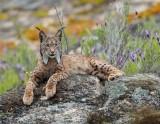 Το δίκτυο Natura 2000 χρήζει καλύτερης διαχείρισης, χρηματοδότησης και παρακολούθησης, δηλώνουν οι ελεγκτές τηςΕΕ