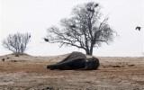 Κονγκό: Σφαγή 30 ελεφάντων απόλαθροκυνηγούς