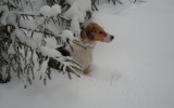 Απαγόρευση θήρας, σε περίπτωση χιονοπτώσεων, στο ν.Καρδίτσας
