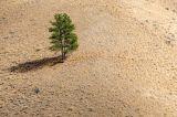 Το 40% των γόνιμων εδαφών κινδυνεύει απόερημοποίηση