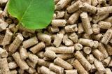 Παραγωγή βιομάζας και τεχνικού ξύλου από φυτείες ταχυαυξών δασικών δέντρων: μια σταθερή και ασφαλήςεπένδυση