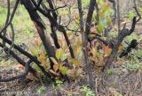 Επτά χρόνια από τις πυρκαγιές στην Ηλεία, το δάσος μεγαλώνειξανά