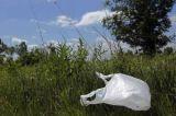 Δασάρχης Πύργου: Ρίχνουν τα σκουπίδια σε αναδασωτέαπεριοχή