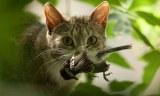 Νέα εκστρατεία κατ' οίκον περιορισμού γατών για τη διάσωσηπτηνών