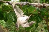 Ψάχνουν τρόπο για την νομιμοποίηση του κυνηγιού αμπελοπουλιών. – Θύελλα αντιδράσεων από περιβαλλοντικέςοργανώσεις