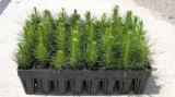 Ανακοίνωση διάθεσης δασικών φυτών από τα δασικά φυτώρια της Αν.Μακεδονίας & Θράκης για την περίοδο2014-2015.