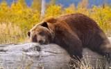 Έργα 1,5 εκατ. ευρώ για τη συνύπαρξη ανθρώπου και αρκούδας σταΓρεβενά
