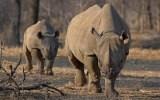 Διαδηλώσεις σε όλο τον κόσμο για τα άγρια ζώα που απειλούνται μεεξαφάνιση
