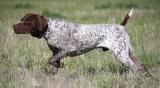 Προσκόμιση βιβλιαρίων κυνηγετικών σκύλων για την έκδοση άδειαςθήρας