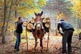 Δασικές Συνεταιριστικές Οργανώσεις και άλλεςδιατάξεις