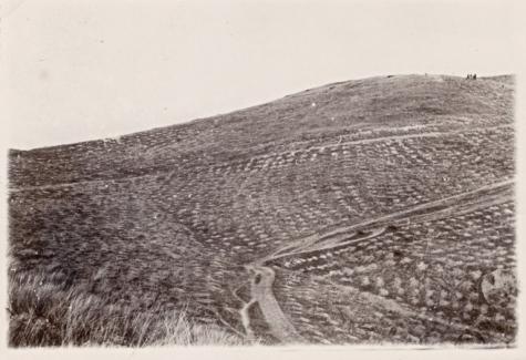 6.Αναδασώσεις της δεκαετίας του '50 στο δάσος-πάρκο Θεσσαλονίκης (από το αρχείο του συγγραφέα)
