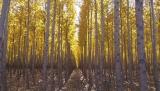 Μειώνεται ο ελάχιστος αριθμός δένδρων ανά στρέμμα για τη Πρώτη ΔάσωσηΓαιών