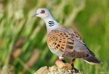 Βήματα μπροστά, διαφωνίες, αλλά και δημιουργικότητα για τα μεταναστευτικά πουλιά τουΙονίου