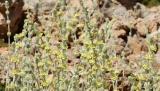 Συλλογή και καλλιέργεια αρωματικών φυτών σε δασικές εκτάσεις
