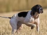 Αυστηροί έλεγχοι και υψηλά πρόστιμα στους κυνηγούς για τα κυνηγόσκυλα