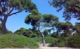 SOS για την προστασία του Εθνικού Πάρκου Σχινιά-Μαραθώνα