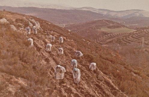 Μέρα βροχερή. Εργάτριες με αδιάβροχα χιτώνια φυτεύουν απόκρημνη πλαγιά σε αναδάσωση της δασικής υπηρεσίας στα μέσα της δεκαετίας του 1960. (αρχείο Αντώνιου Β. Καπετάνιου)