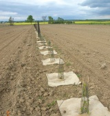 Ενισχύσεις για δασώσεις και γεωργοδασοκομικά συστήματα