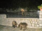 Εμφανίστηκαν ξανά τα τρία αρκουδάκια στοΜέτσοβο