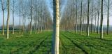 Ημερίδα: «Δασικές δενδρώδεις καλλιέργειες για την παραγωγή βιομάζας, τεχνικού ξύλου,κ.α.»