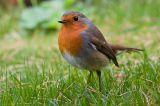 Παρακολουθώντας τη μετανάστευση των πουλιών στην ΗρακλειάΚυκλάδων