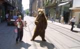 Καλύτερες μέρες για τις σιδηροδέσμιες αρκούδες τηςΑλβανίας