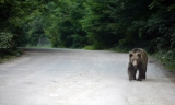 Σύσκεψη με αφορμή τα περιστατικά εμφάνισης Αρκούδων στην Π.Ε.Καστοριάς