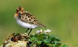 Προστασία αγρίων πτηνών και ζώνες ειδικής προστασίας(ΖΕΠ)