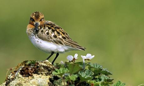 biopoikilotita biodiversity poulia