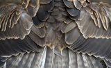 Τα φτερά των πτηνών είναι ισχυρά σαν… ανθρακονήματα