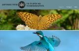 Όλα όσα θες να μάθεις για τη βιοποικιλότητα σε έναν δικτυακό τόπο