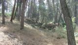 Καλλιεργητικές υλοτομίες στο αισθητικό δάσοςΙωαννίνων
