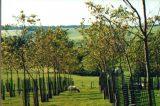 Εφάπαξ επιδότηση έως 9.000 ευρώ για την πρώτη φύτευσηδενδρώνων