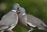 Birdwatching: Η φύση προσφέρειθέαμα