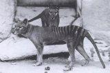 Επαναφορά στη ζωή εξαφανισμένων ειδών: Η δυνατότητα και το ηθικόζήτημα