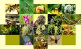 Βιοποικιλότητα και ο ΑειφόροςΤουρισμός
