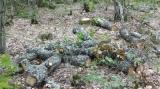 Πότε και πώς θα σταματήσει η αυθαίρετη υλοτομία των βουλγάρικωνδασών;