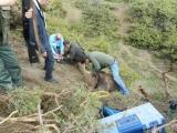 Απελευθέρωση αρκούδας από θηλιάλαθροκυνηγών
